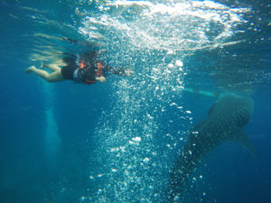 snorkelling with shark 2