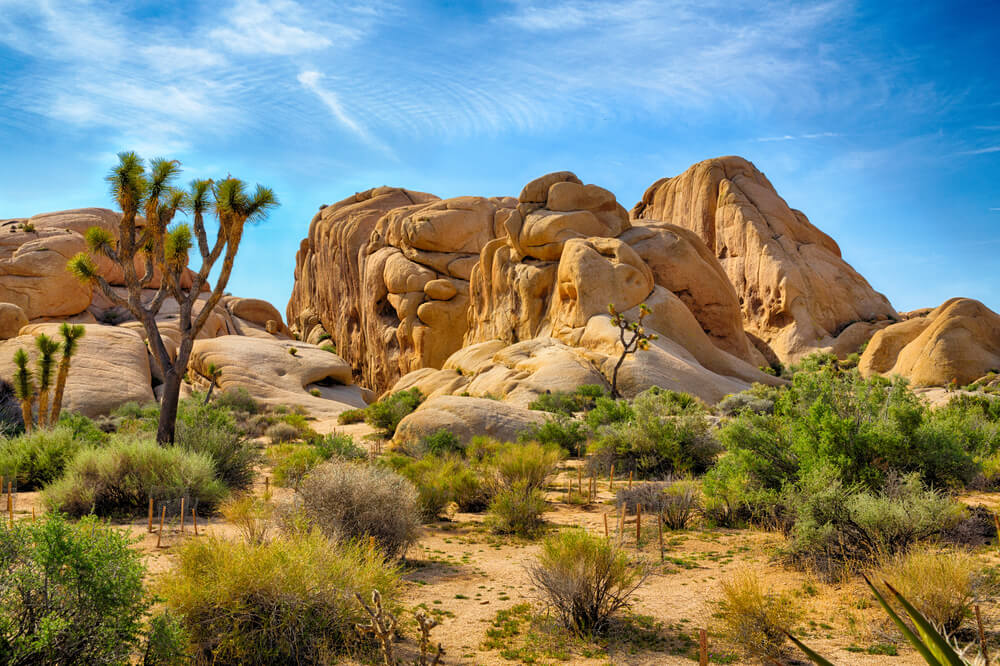 Boulders and Joshua Trees in Joshua Tree National Park, California