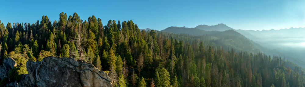 Morning in Mountains Sequoia National Park Panoramic view California USA