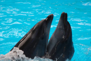 dolphins-in-sea-world